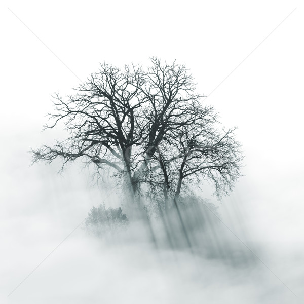 Lone Tree silhouette in foggy morning Stock photo © Taiga