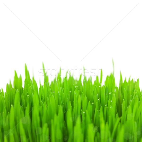 Сток-фото: свежие · зеленый · пшеницы · трава · капли · bokeh
