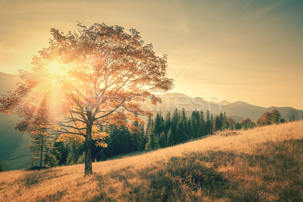 Autumn tree and sunbeam warm day in vintage color Stock photo © Taiga