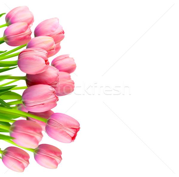 границе нежный розовый тюльпаны свежие цветы Сток-фото © Taiga