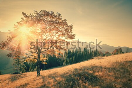 Najaar boom bergen landschap vintage kleur Stockfoto © Taiga