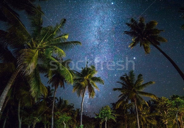 Night shot with palm trees and milky way in background Stock photo © Taiga