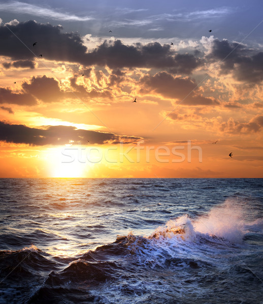 Stormy sea with sundown and birds / beautiful weather Stock photo © Taiga