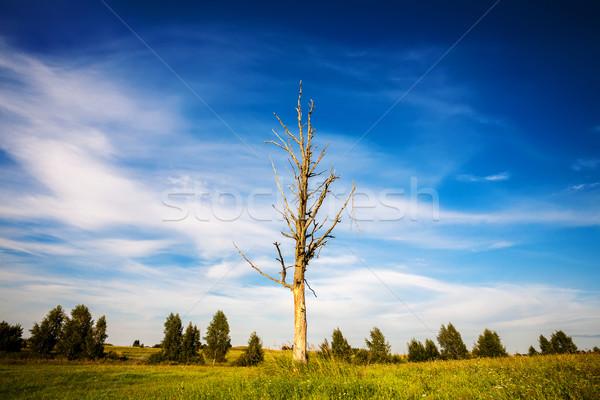Egyedüli kidőlt fa tájkép mező égbolt fű Stock fotó © Taigi