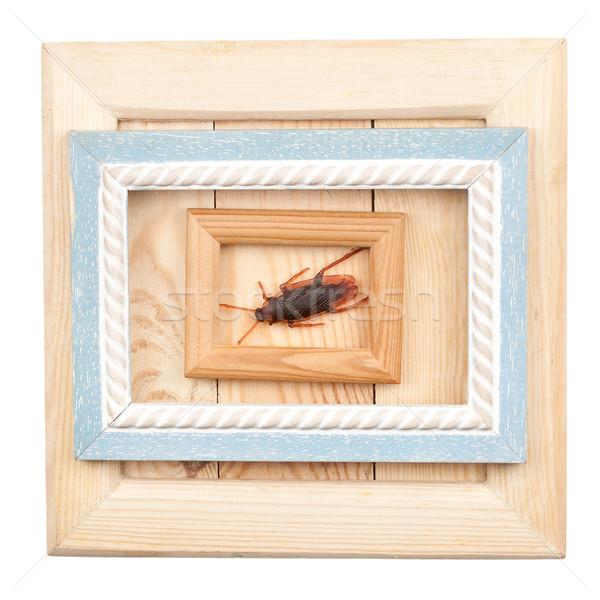 Eski ahşap kareler sahte hamamböceği yalıtılmış Stok fotoğraf © Taigi