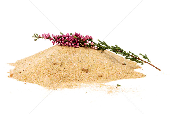 Pile of yellow sand and heather twig Stock photo © Taigi