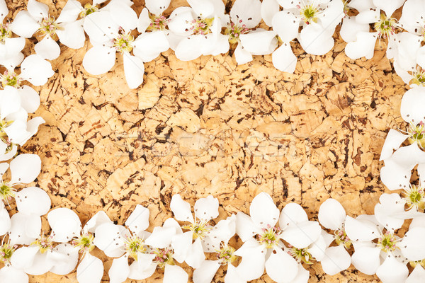 White flowers on corkboard Stock photo © Taigi