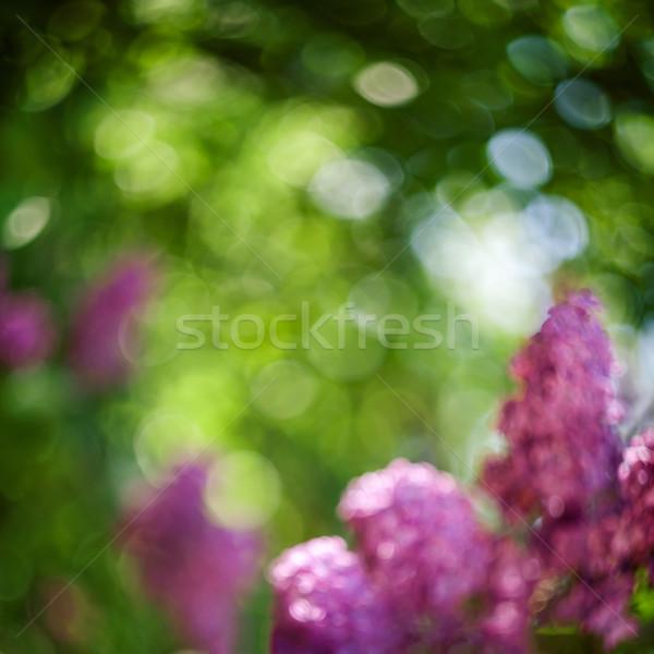 Absztrakt világoszöld lila bokeh fény virág Stock fotó © Taigi