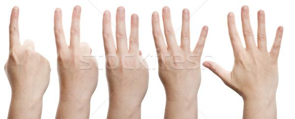 Counting hands Stock photo © Taigi