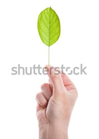 Zöld levél kéz izolált fehér háttér pálma Stock fotó © Taigi