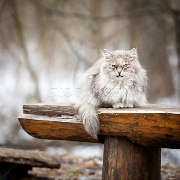 Macska pad szem arc narancs állat Stock fotó © Taigi