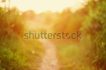 Centrado camino puesta de sol naturales bokeh carretera Foto stock © Taigi