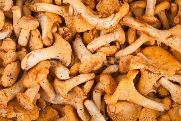 Fresh chanterelle mushrooms  Stock photo © Taigi