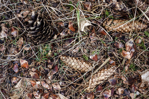 Natural forest ground Stock photo © Taigi