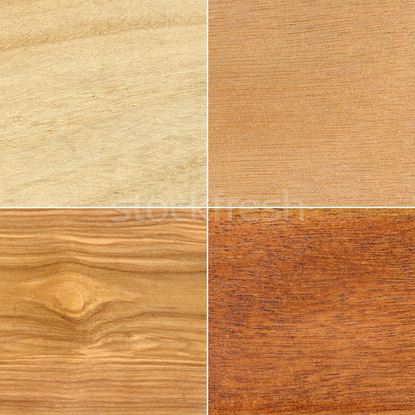 Set of wood textures Stock photo © Taigi