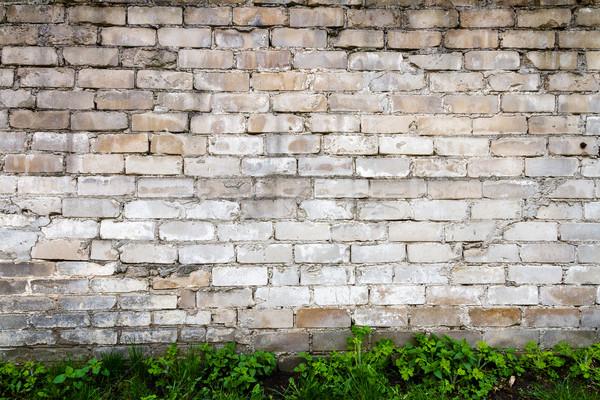 Zdjęcia stock: Biały · murem · zielona · trawa · tekstury · budynku · tle