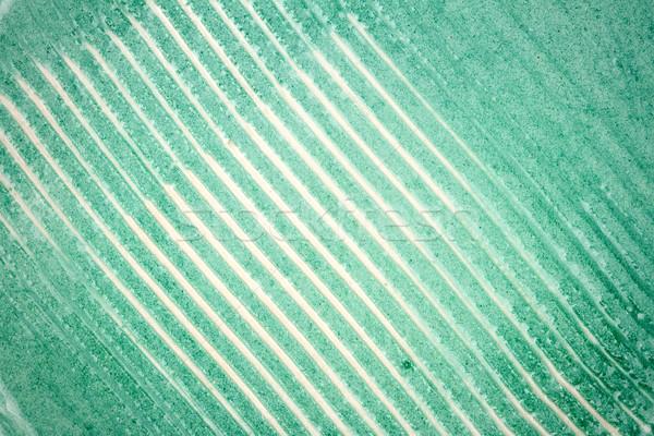 クローズアップ ショット セラミックス テクスチャ 緑 壁 ストックフォト © Taigi