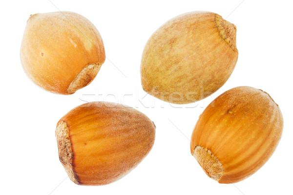 Four forest hazelnuts Stock photo © Taigi