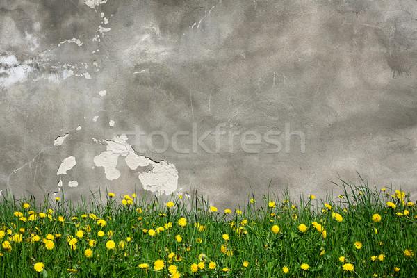 Stock fotó: Fal · pitypangok · öreg · grunge · utca · virágzó