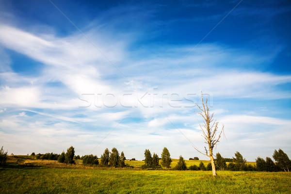 Toter Baum Landschaft Bereich Himmel Gras Stock foto © Taigi