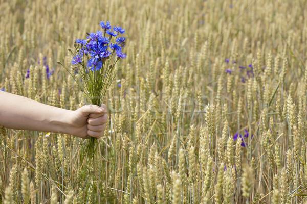 Hand holding bluebottles Stock photo © Taigi