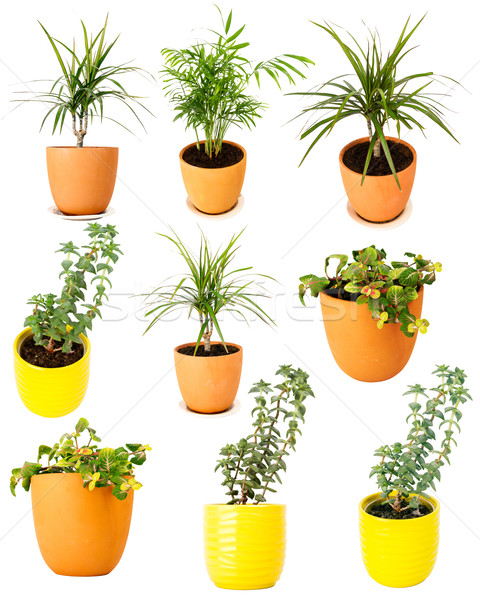 Collection of various potted plants Stock photo © Taigi