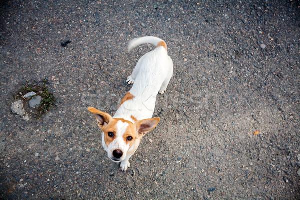 Hajléktalan kutya kérdez étel szem utca Stock fotó © Taigi