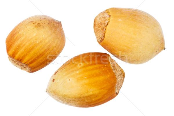 Three forest hazelnuts Stock photo © Taigi