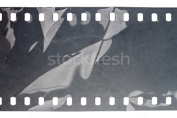 Velho grunge filmstrip barulhento cinza isolado Foto stock © Taigi