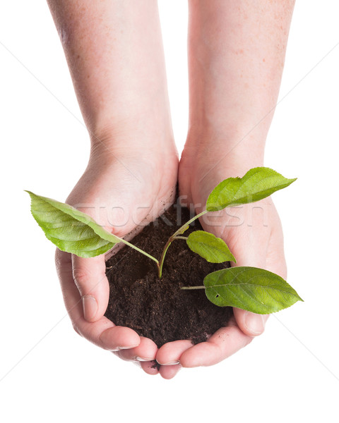 Plant in a hands  Stock photo © Taigi