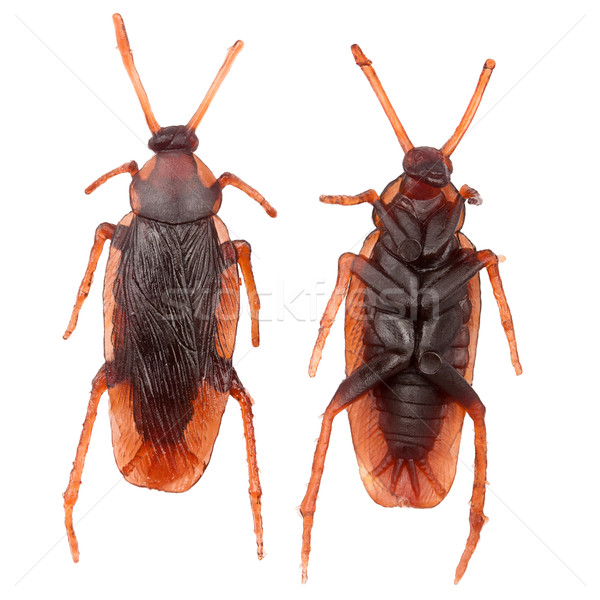 Falso gomma scarafaggio entrambi isolato bianco Foto d'archivio © Taigi