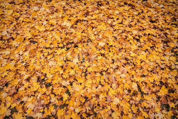 Background from autumn Stock photo © Taigi