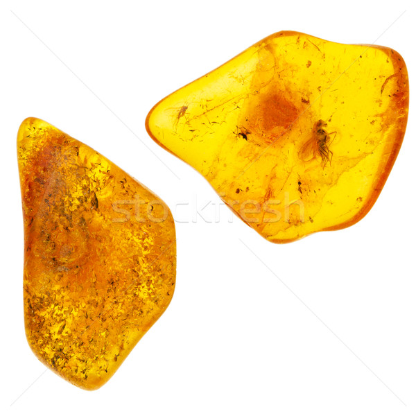 Two piecies of amber with prehistoric incects Stock photo © Taigi