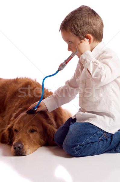 играет ветеринарный Cute мало мальчика собака Сток-фото © Talanis