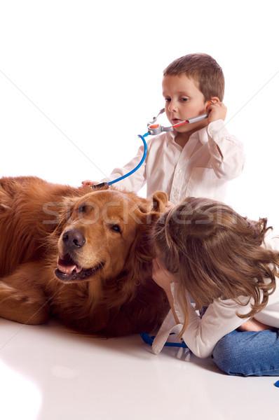 играет ветеринарный Cute мало брат сестра Сток-фото © Talanis