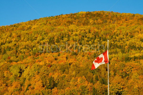 Canadian fall Stock photo © Talanis