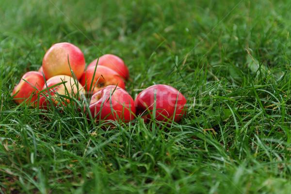 Foto stock: Vermelho · suculento · maçãs · grama · verde · comida · grama