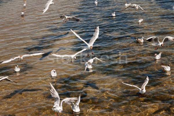 Over the sea along the beach gulls fly Stock photo © TanaCh