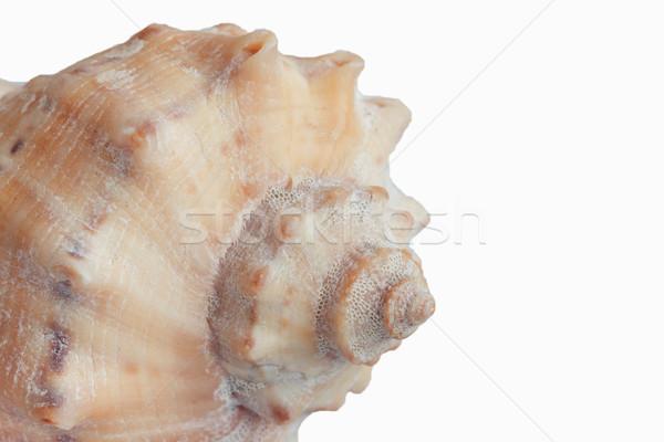 Geïsoleerd witte textuur natuur Stockfoto © TanaCh