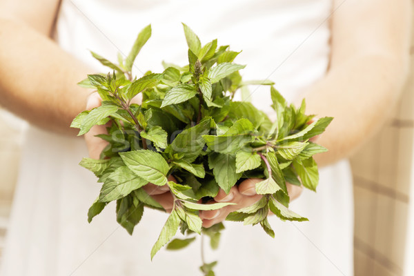 a bunch of fresh mint in male hands, close-up, retro toning Stock photo © TanaCh