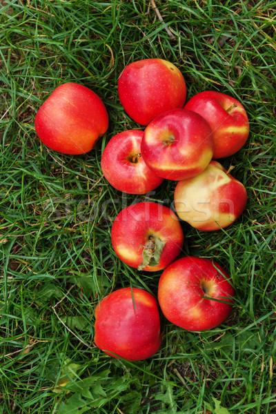 Czerwony soczysty jabłka zielona trawa żywności trawy Zdjęcia stock © TanaCh