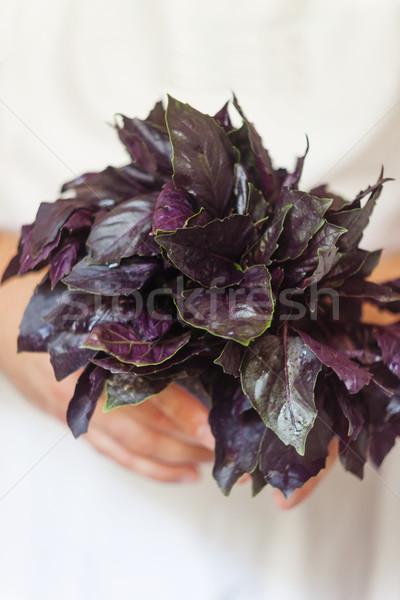 Bos vers paars basilicum hand Stockfoto © TanaCh