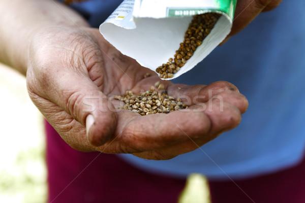 女性 手 白 豆 種子 ストックフォト © TanaCh
