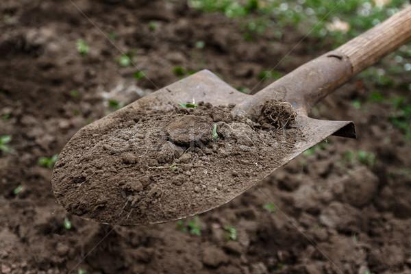 手 土壌 シャベル クローズアップ ガーデニング 手 ストックフォト © TanaCh