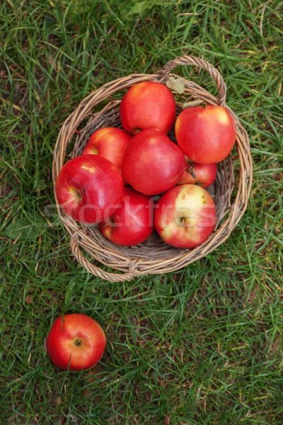 ジューシー 赤 リンゴ バスケット 緑の草 先頭 ストックフォト © TanaCh