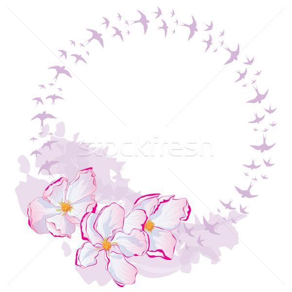 apple flowers and swallows, frame Stock photo © tanais