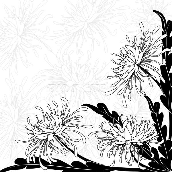 Krizantem siyah beyaz renkler çiçek soyut Stok fotoğraf © tanais