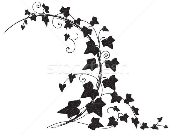 Lierre vecteur cadre branche feuille noir Photo stock © tanais