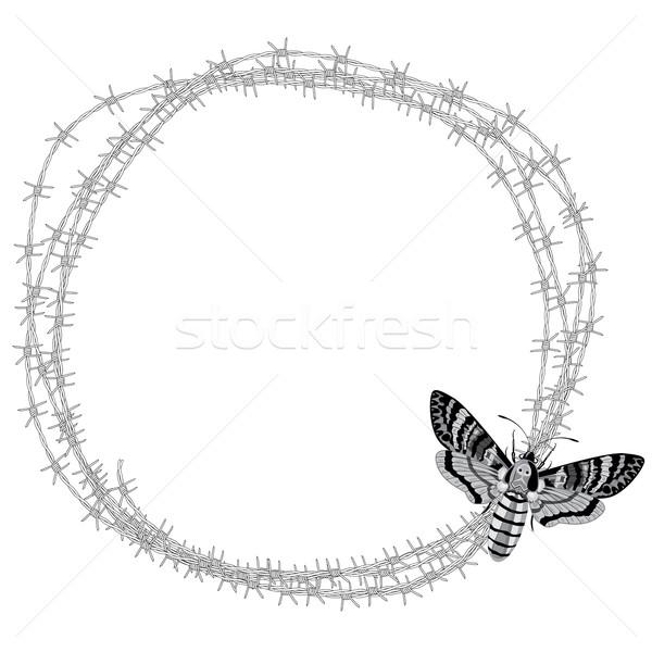 Tête faucon barbelés vecteur cadre papillon Photo stock © tanais