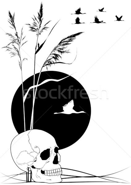 Schädel · Vektor · schwarz · weiß · Farben · Sonne · Landschaft ...